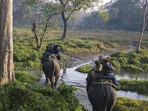 Nahargarh Elephant Safari