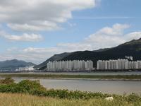 Nakdong River Estuary Migratory Bird Sanctuary