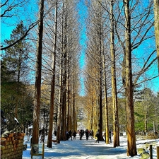 Seoul with Nami Island Tour Photos
