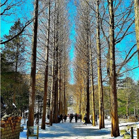 Seoul with Nami Island Tour Photos