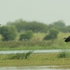 Nandur Madhmeshwar Bird Sanctuary4