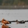 Nandur Madhmeshwar Bird Sanctuary5