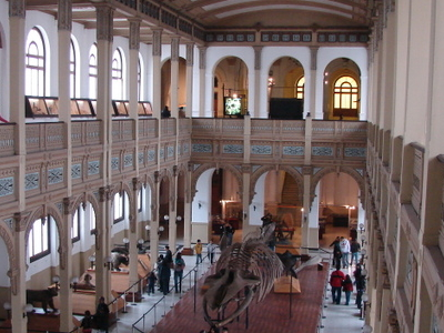Central Hall With Blue Whale Skeleton