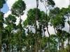 Nature Along Way Up The Gia Laos Mountains