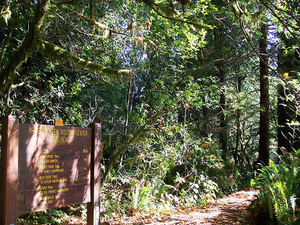 Redwood Nature Trail