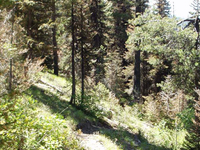Needles Route Trail