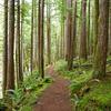 Ngahiramai Hut To Tawhiwhi Hut Track - Te Urewera National Park - New Zealand