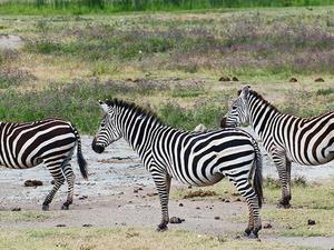 Ngorongoro Crater Day Trip Photos