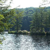 Nipmuck State Forest