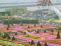 Nong Nooch Botanical Garden