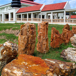 Northeastern Museum of Petrified Wood
