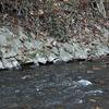 Northwest Branch Anacostia River Maryland