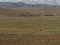 Nyika National Park