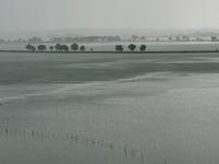 East Kolkata Wetlands