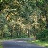 National Highway 31 At Lataguri