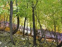 Oak Trail 16
