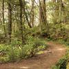 Ohora Hut Track - Te Urewera National Park - New Zealand