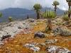 Old Caldera - Mount Elgon - Uganda
