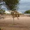 Old Las Vegas Mormon State Historic Park