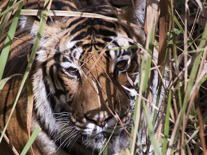 Ranthambhore & North India Trip Photos