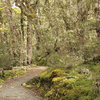 Onepoto Caves Track - Te Urewera National Park - New Zealand