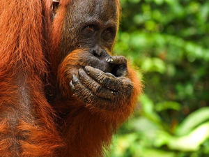 3 Days Orangutan Tour at Tanjung Puting National Park