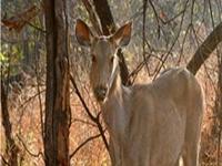 Orchha Wildlife Sanctuary