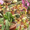 Rows Of Orchids Lankester Botanical Garden
