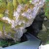 Oregon Caves Entrance