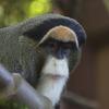 Oregon Zoo Primates