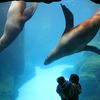 Oregon Zoo Sea Lions