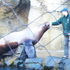 Oregon Zoo Steller Sea Lion