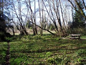 Ossagon Creek Campground