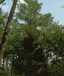 Ozark St. Francis National Forest
