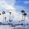 Palmyra Palms At Kampong Speu