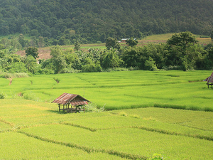4-Night Experience in Chiang Mai: Palong Villages Stay and Chiang Dao Trek Photos
