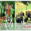 Pania Wildlife Sanctuary