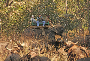 Panna Elephant And Night Safaris