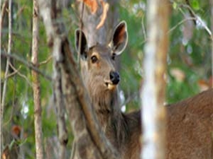 Panpatha Wildlife Sanctuary