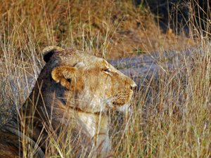 Gir Safari Package Photos