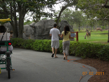 Park View In Zoo