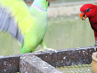 Kuala Lumpur Bird Park