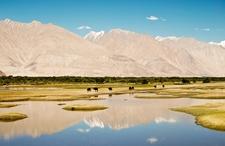 Pasture Near Leh - Ladakh Range