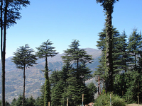 Patnitop