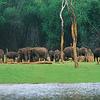 Periyar Wildlife Sanctuary