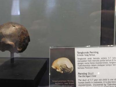 Perning Skull