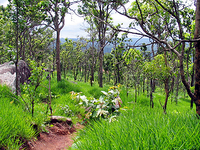 Phu Laen Kha National Park