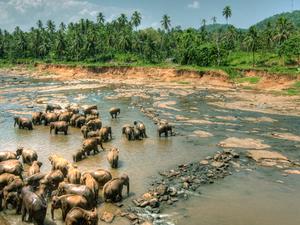 Kandy Excursion Photos