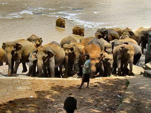 8 Days Sri Lanka - Adventure Tour Photos