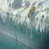 Polar Bear Near Nanortalik
